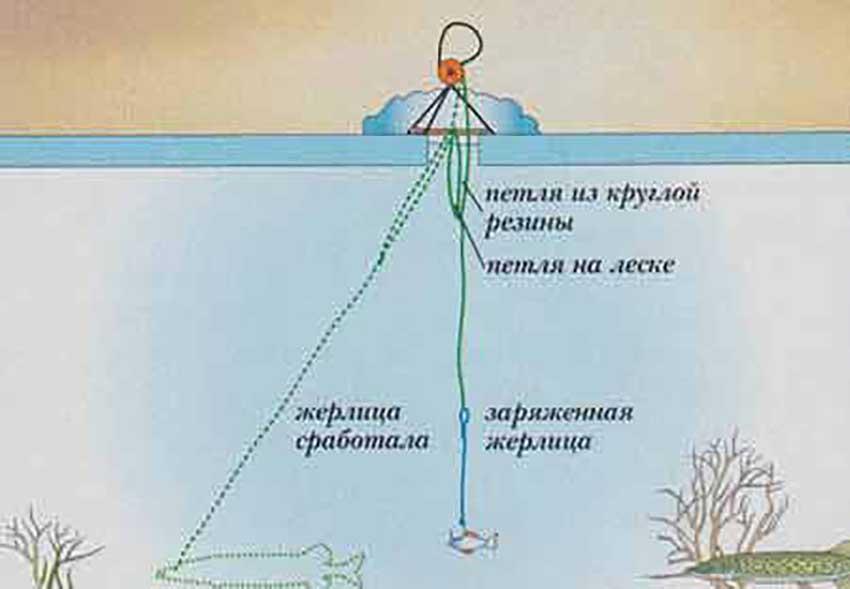 как правильно ставить жерлицу на судака